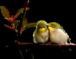 Gabry-uccellini-26.png