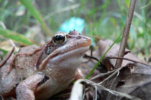 осень осенняя лягушка