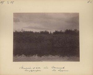 6.8.1887. Берег Вороньей реки