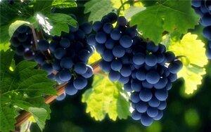 Вино с выдержкой 6 тысяч лет – нашли в Греции