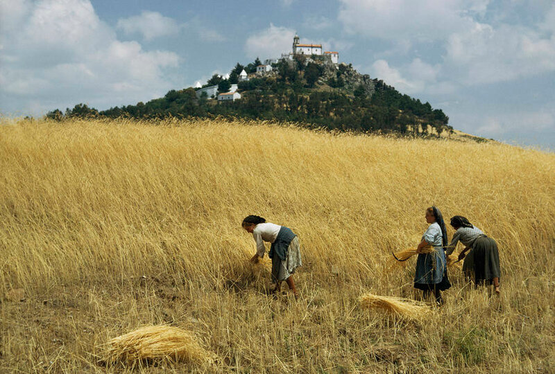 1965 Tras os Montes, Portugal women-harvest-golden-wheat-with-sickle-volkmar-k-wentzel.jpg