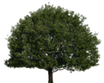 tree_51_png_by_gd08-d4b2n6f.png