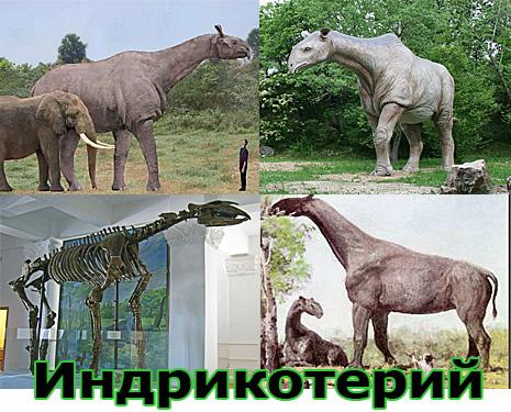 Самые большие животные в мире, существовавшие на земле (фото 18)