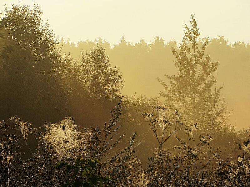 Осенние туманы. В лес за опятами