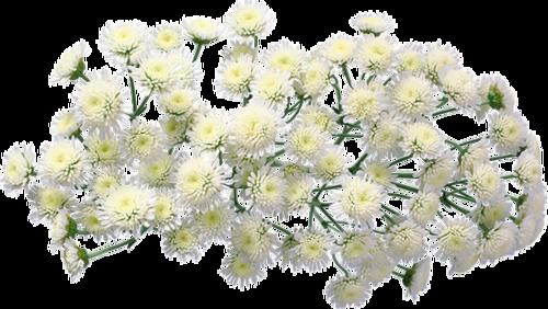 Празднование ДНЯ РОЖДЕНИЯ ФОРУМА. 0_8c4b3_75d30e4d_XL