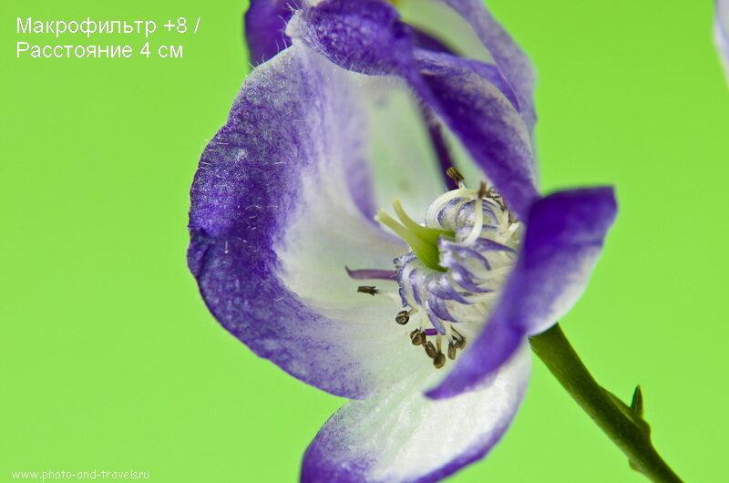 Фото 10. Макролинза Close-UP +8 с расстояния 4 см дает такое увеличение