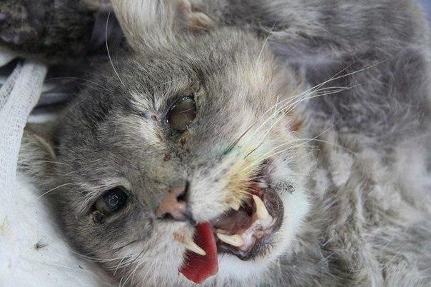 травмы кошек