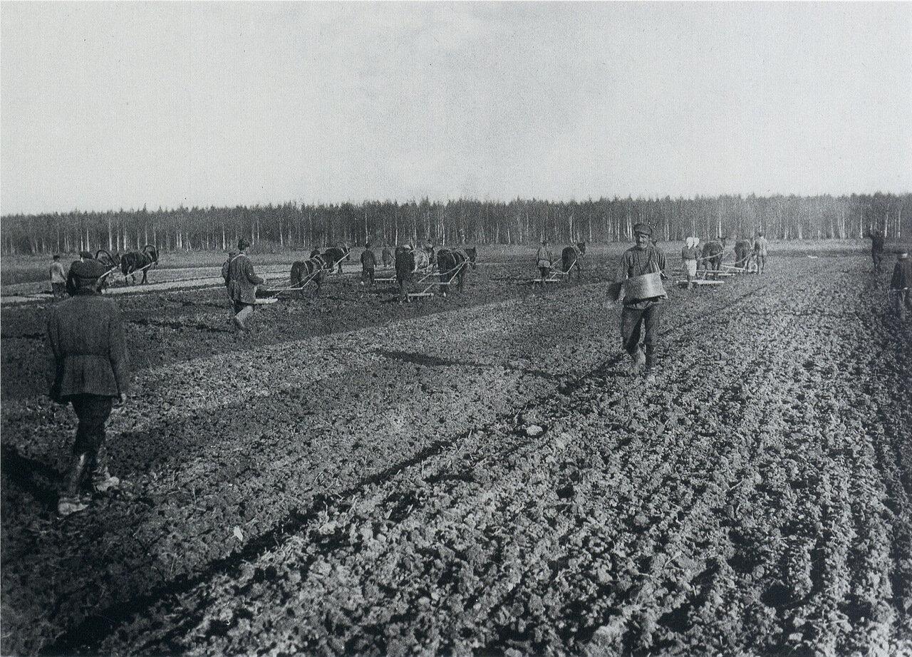 Крестьяне засевают поле. 1900-е.
