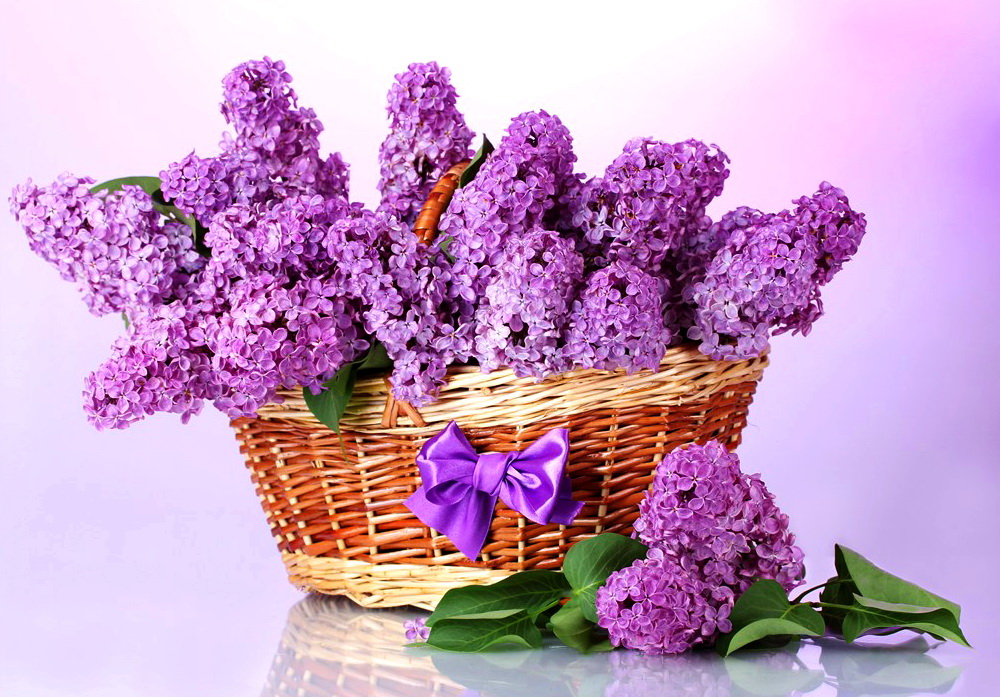 【本博精典素材篇】唯美淡紫色的花 高清大图 - 浪漫人生 - .