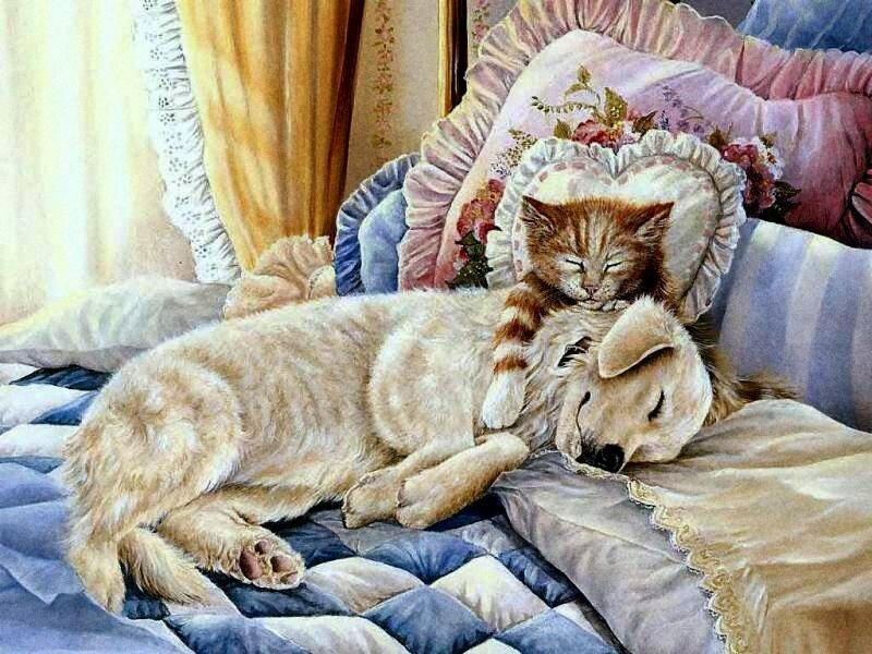 Persis Clayton Weirs. О проказниках кошках. Где угодно кошки спят! Кошки спят, где захотят!