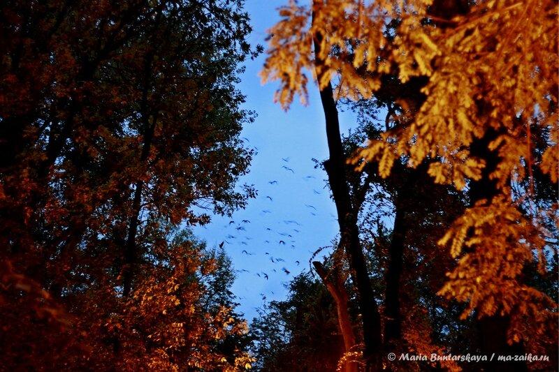 Стая, Саратов, парк 'Липки', 04 октября 2013 года