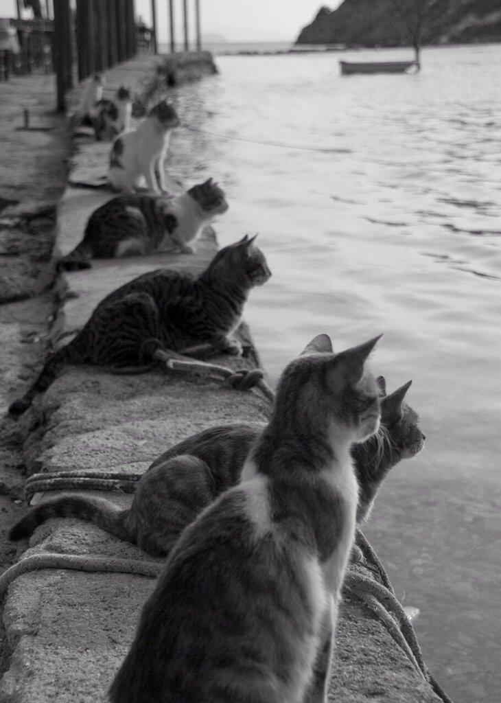 А наша кошка как–то в мае, ждала на берегу баркас...