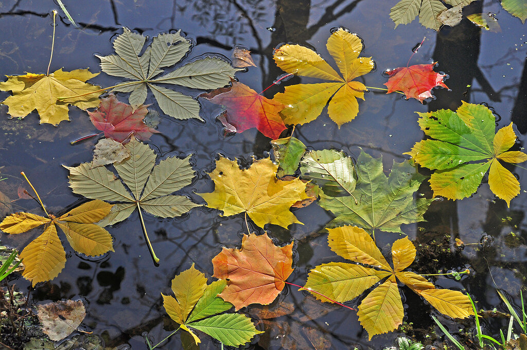 Повсюду листья желтые, вода прозрачно-синяя...