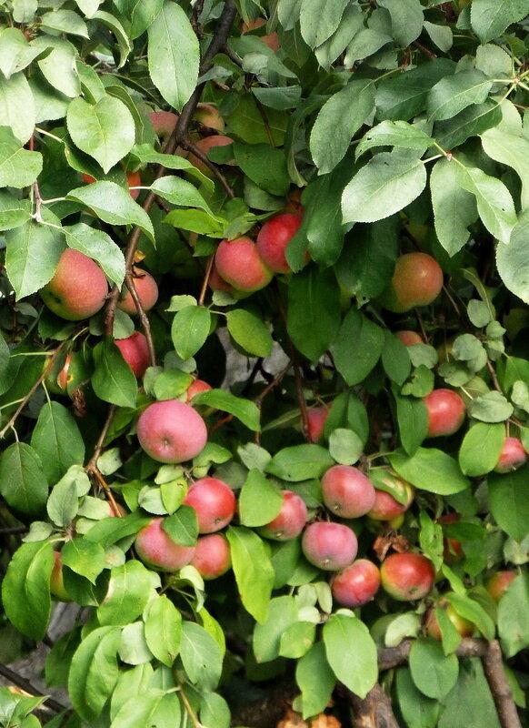 Монастырские яблочки