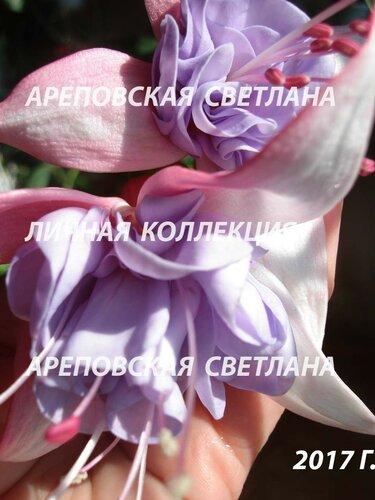 НОВИНКИ ФУКСИЙ. - Страница 5 0_19a01f_fa820717_L