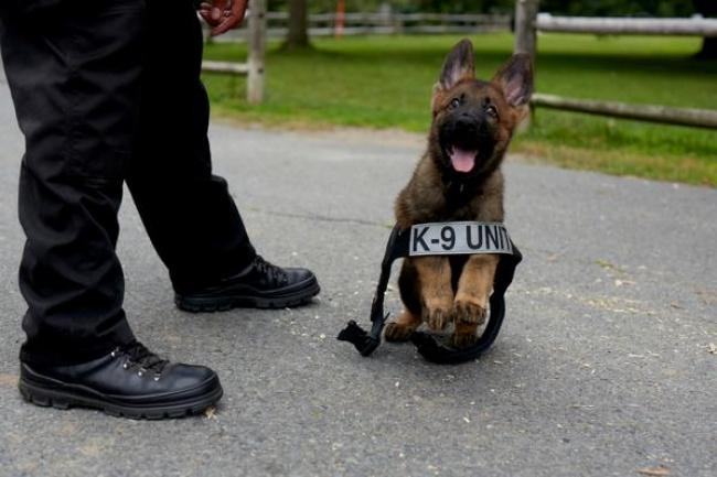 © bostonpolice  Ихжилет— это непросто симпатичный наряд, это униформа. Онинформирует други