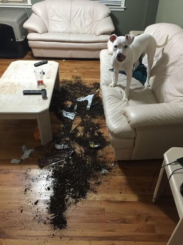 Нападение на диван