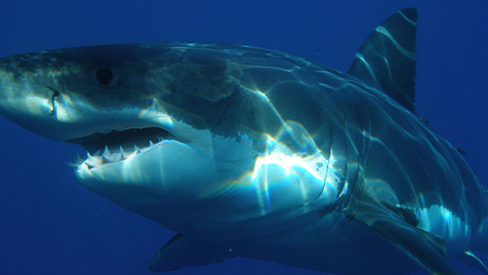 Порноактрису вовремя съемок укусила акула