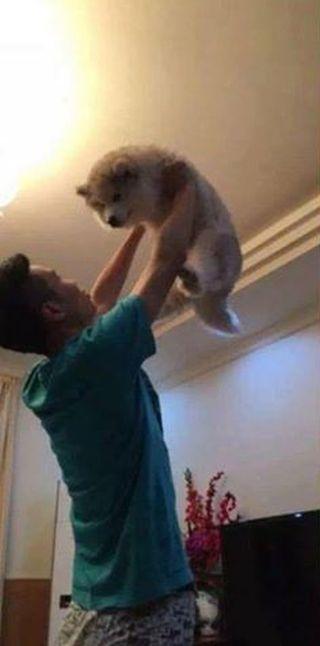 Собака выросла, а привычка осталась