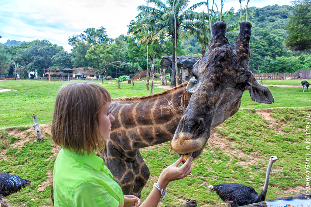 кхао кхео зоопарк