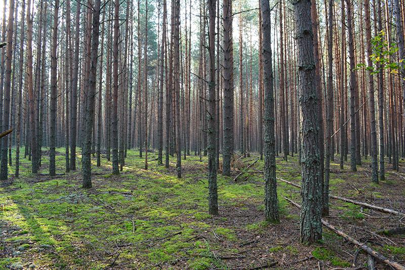 леса 29.jpg