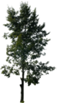 tree_14_png_by_gd08-d2ysa5q.png