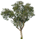 tree_17_png_by_gd08-d2yuc09.png