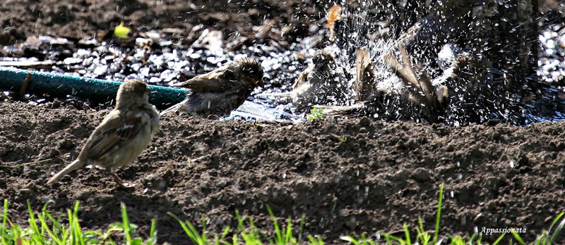 Водные процедуры в Александровском саду