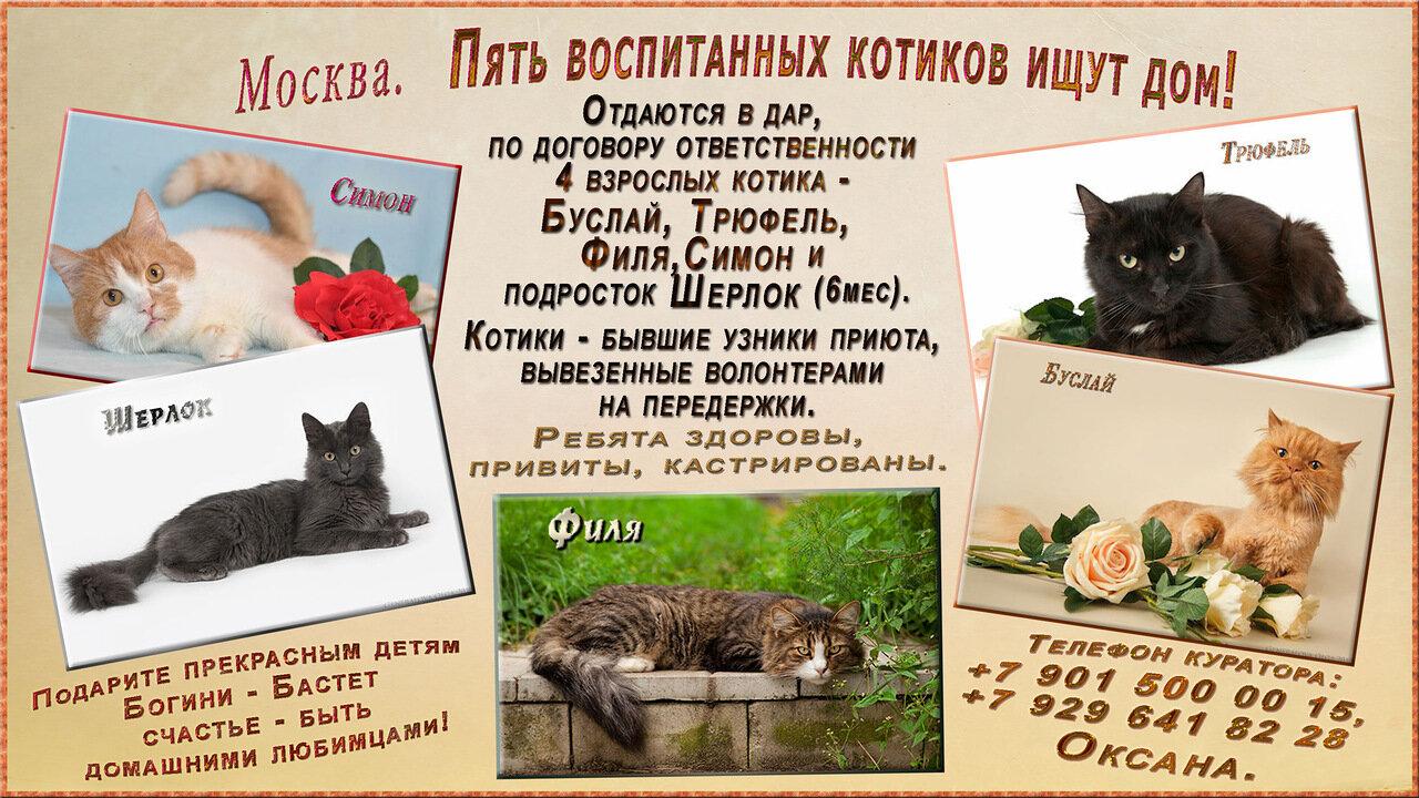 Москва (МО). Пять воспитанных котиков ищут дом!