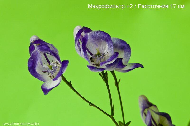 Фотография 5. Приме фотографии, снятой с макролинзой +2 на китовом объективе Nikon 18-55.