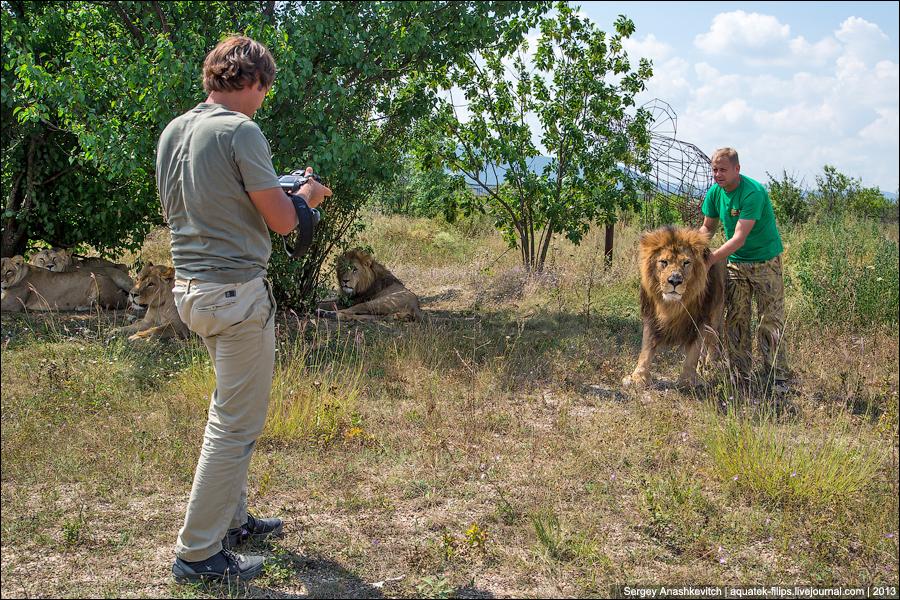 Погладить льва