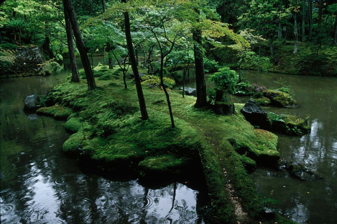 Rain awakens the greens of the garden, enriching the varied hues of moss at Saiho-ji.