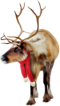 MRD_SnowyDreams-painted raindeer (2).png