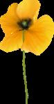 NLD Poppy (3).png