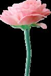 Desclics_Lollipops_EL033.png