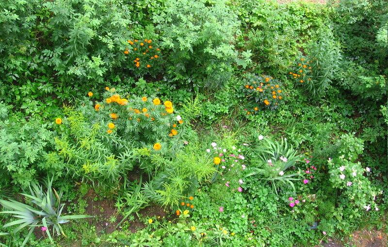 Проект цветника под балконом - зелёный дневник.