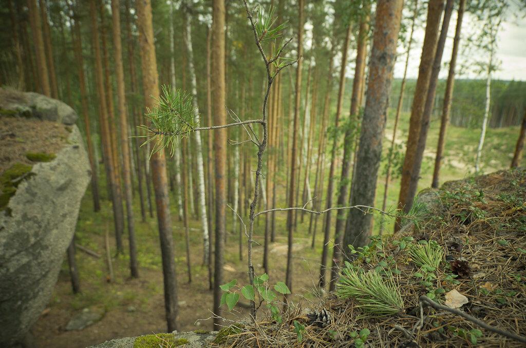 Фото 5. При открытой диафрагме Samyang 14 mm/2.8 выдает неплохое боке. Съемка на Никон Д5100