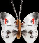 ditab butterfly1b.png