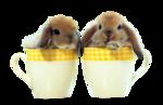 Saphiere_WA_Rabbit_3.png