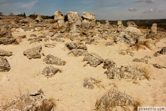 Каменные деревья недалеко от Варны