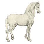 horse_2014 (23).png