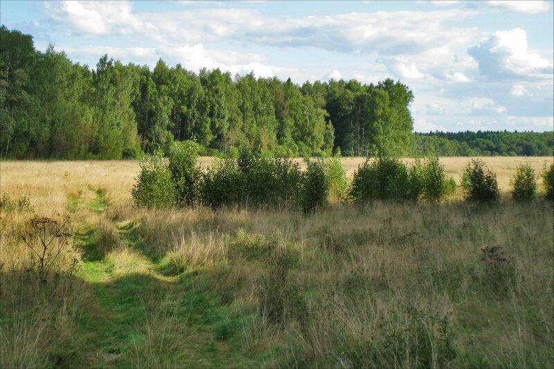 Протасовское поле в конце августа