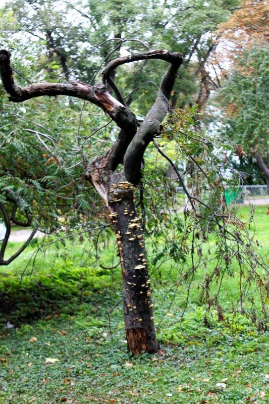 Необычное дерево