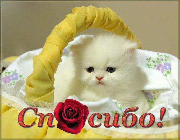 Картинки спасибо с кошками красивые, федор открытки русского