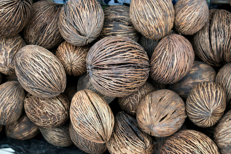 Background of stack of hairy brown coconuts