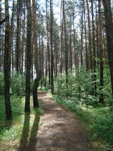 Отдых в Беларуссии: Нарочанские озера, сосны