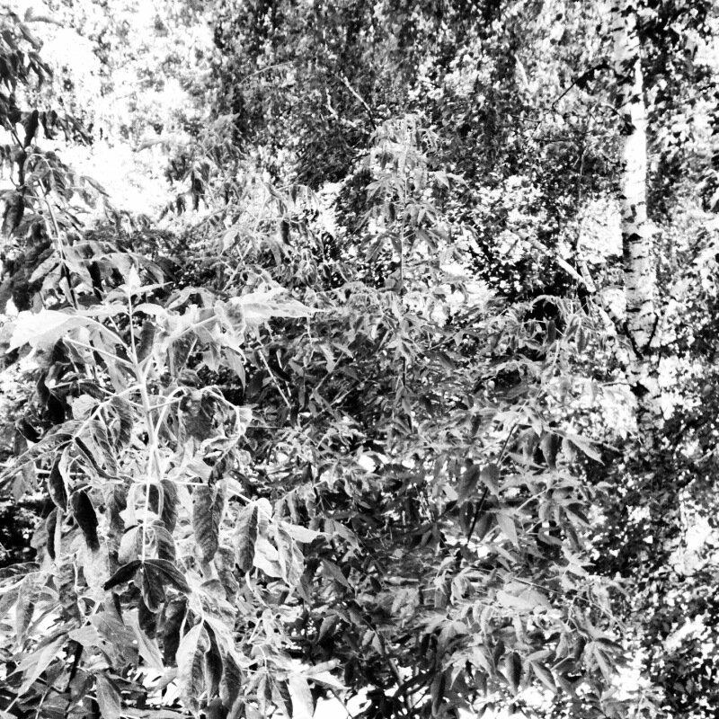 Окно на Соколе июль 2013