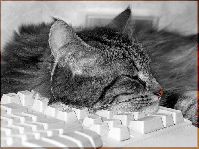 серый на клавиатуре.jpg