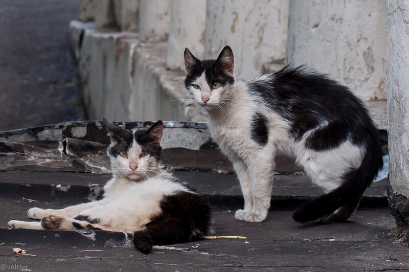 Московские дворовые коты
