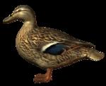 Домашняя птица